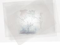夢片採集(5/30~6/11)